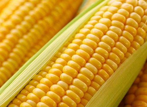 6月22日全国玉米价格表_今日玉米价格走势如何?